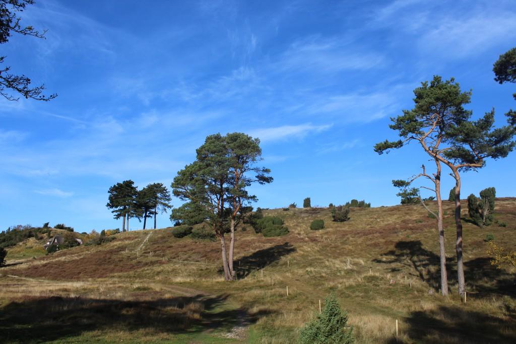 Tibirke Bakker. DDen offentlige sti ses midt i billledet med trappene der førrer op på de 3 højdedarg på mellem 42 og 57 meter over havet. Foto i retning nord den 28. oktober 2015 af Erik K Abrahamsen