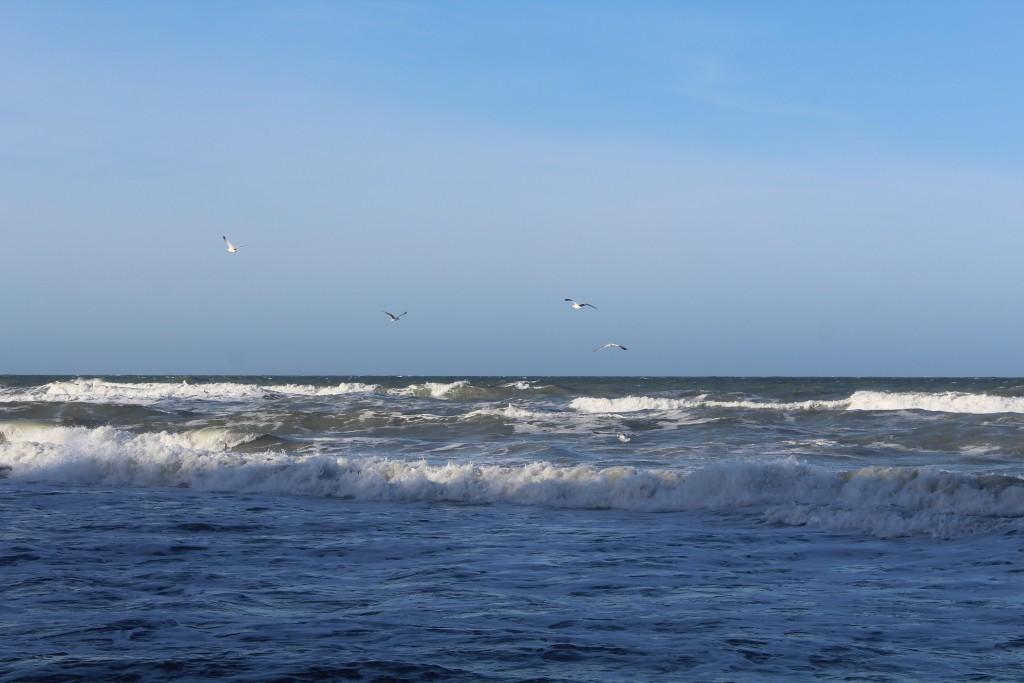 Kattegat ud for Hyllingeberg i Nordsjælland. Måger nyder bølgerne efter stormen FREJA