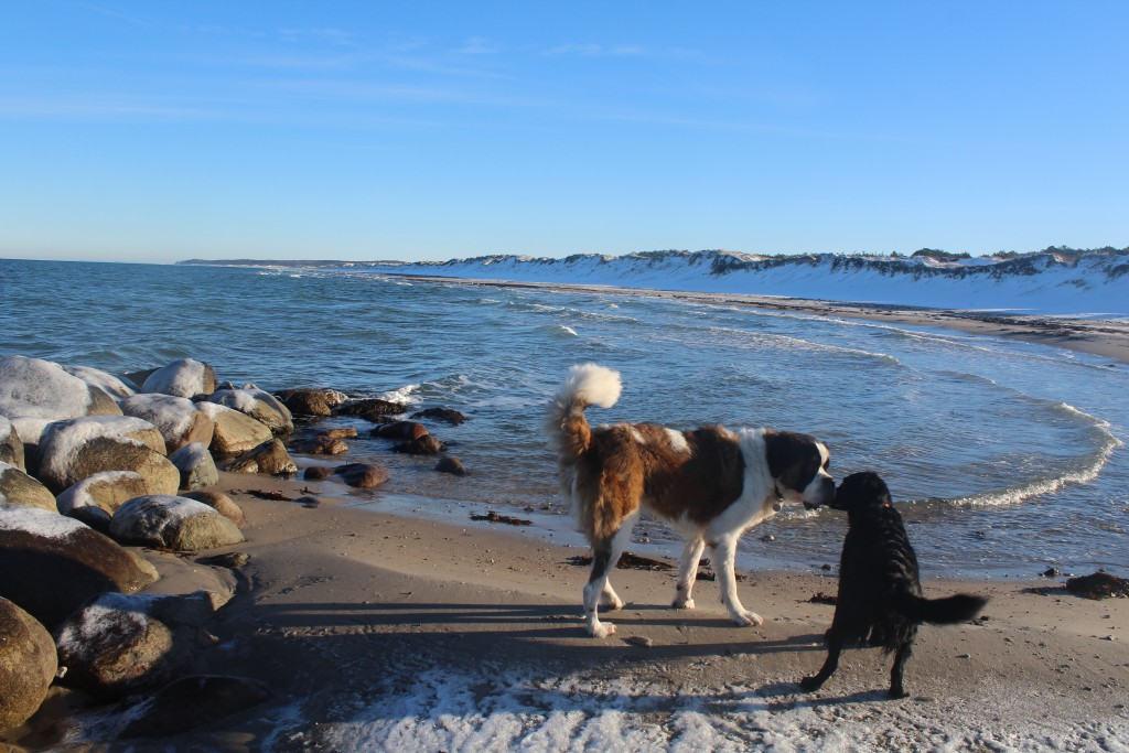 Dogs on Liselej Beach at Kattegat Coast - play, fun and love. Phot in direction east about 11. a.m. the 21. january 2016 by Erik K Abrahamsen