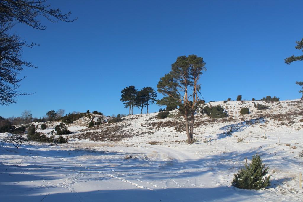 Tibirke bakker. Summerhouses and vegetations are strictly regulated