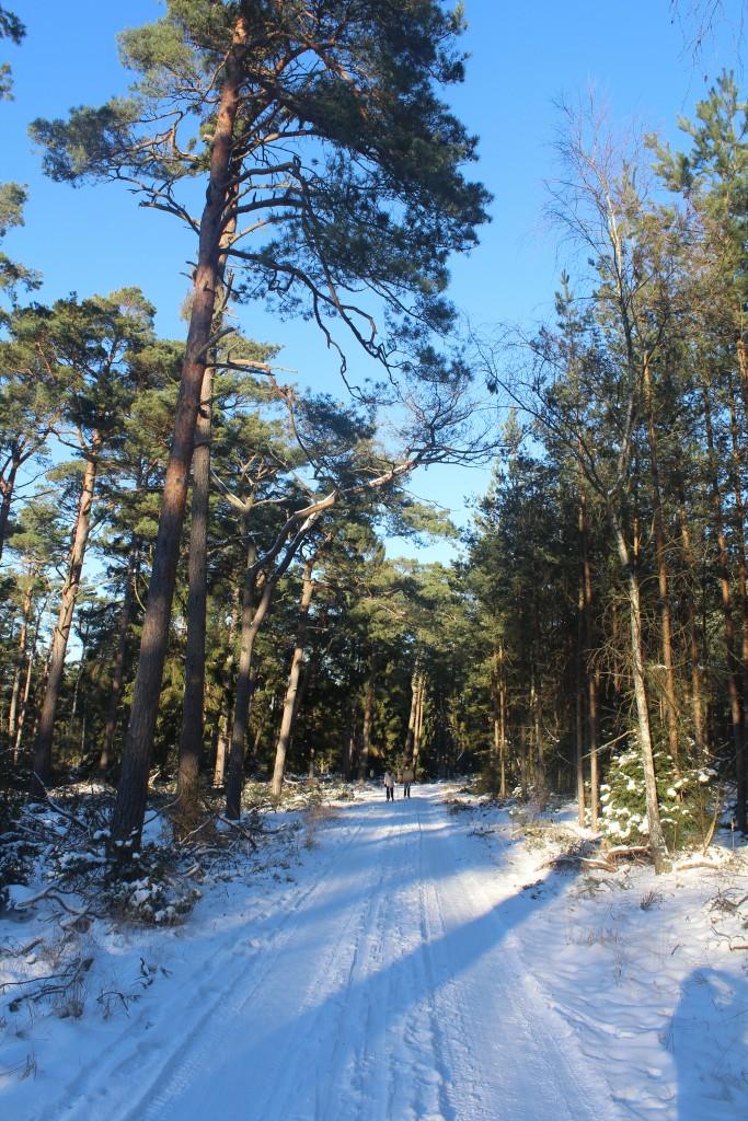 Tisvilde Hegn. A couple on ski at Beach Road (Strandvejen) between Tisvildeleje and