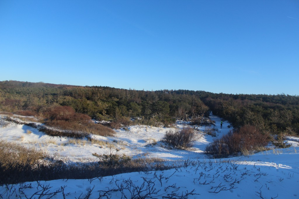 "Troldeskoven"", Tisvilde Hegn. View in direction south"