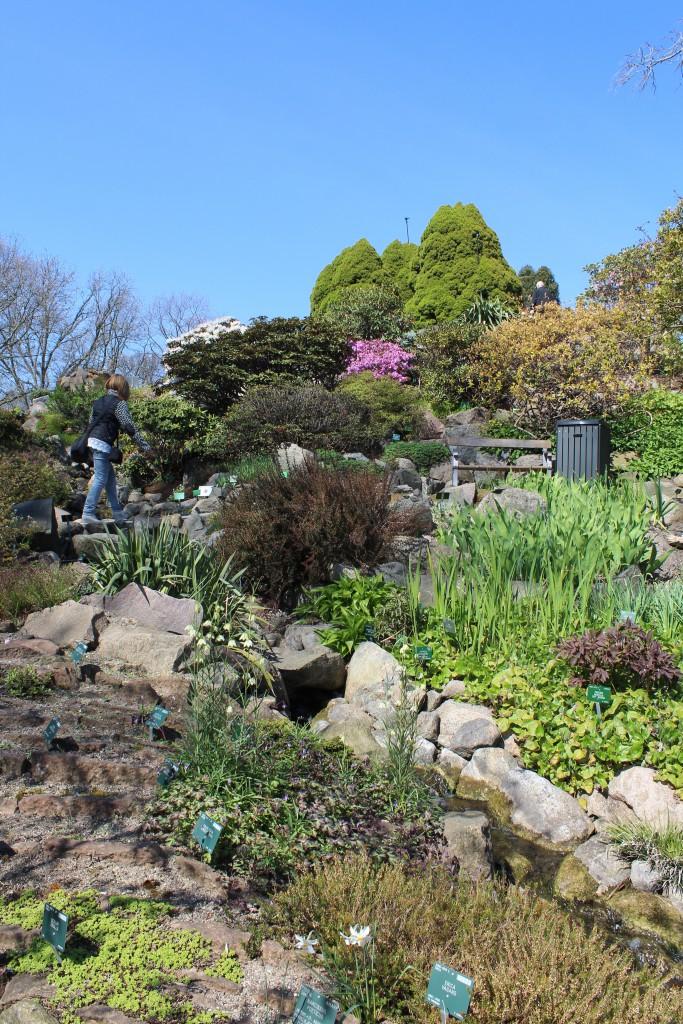 Rock Garden - Stenhøjen with alpine plants. Photo 2. may 2016 by Erik K Abrah