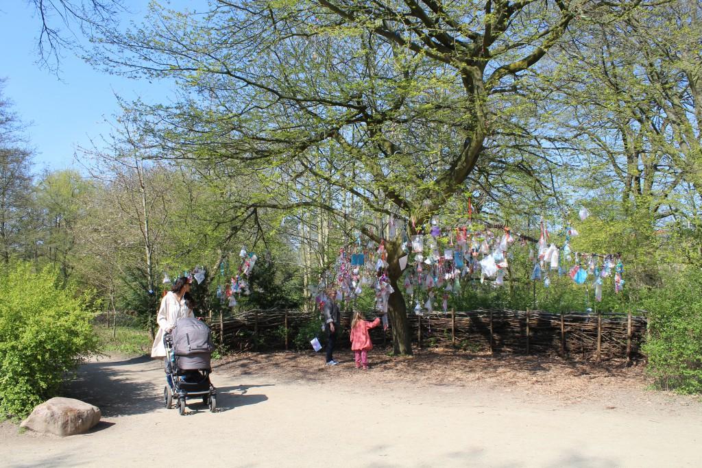 Frederiksberg Garden. Baby sucking dummy tree. Photo 2. may 2o16 by Erik K Abrahamsen.