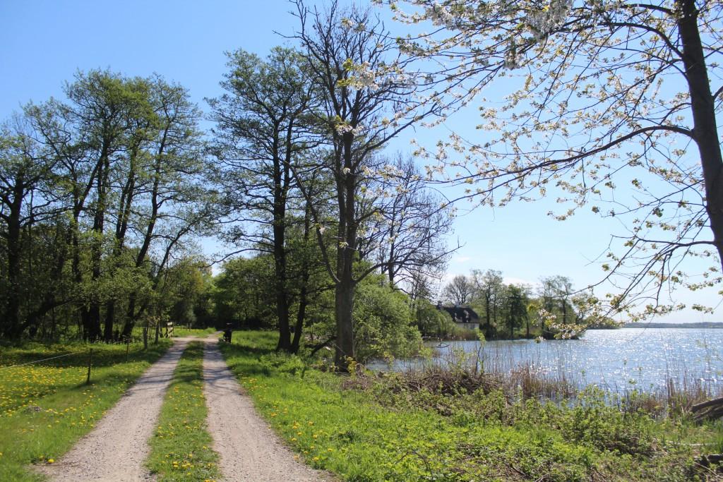 Esrum Lake. Smal eroad passes Esrum River Bridge at north side of Esrum Lake. View in direction eat to Sølyst