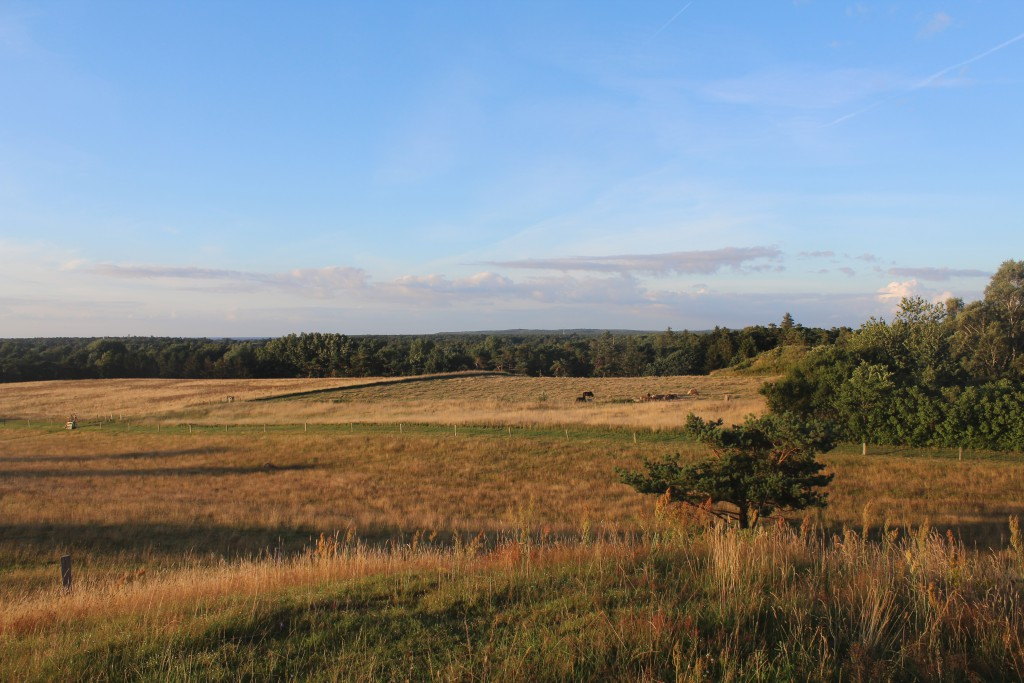 View from burial mound on Seven Highs in direction east to Tisvilde hegn. At right a buresl mounds from Danish Bronze Age 1500 B.C. 27 july 2016 by Erik K Abrahamsen.
