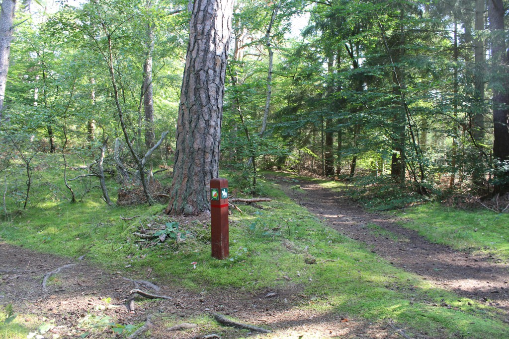 Afmærkning af stier i skoven - idag er stier tørre og giver et godt fast underlag der er perfekt til mountainbike. Foto den 10. september 2016 nær Skov
