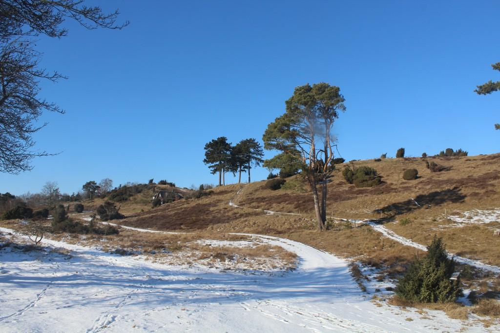Tibirke bakker. Morænebak med en højde på ca. 48 m o.h. Til venstre fritidsbolig. Midt i billedet ses den offentlige sti som går fra Bækkebrovej op til den højeste morænebakke