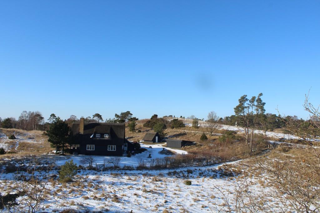 Tibirke bakke. Udsigt mod højeste punkt på morænebakk 57 m o.h. Foto i retning nord den 12.