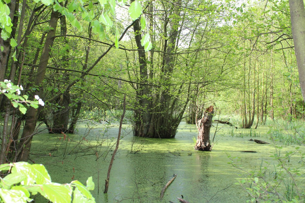 Marselisborg skove med vand