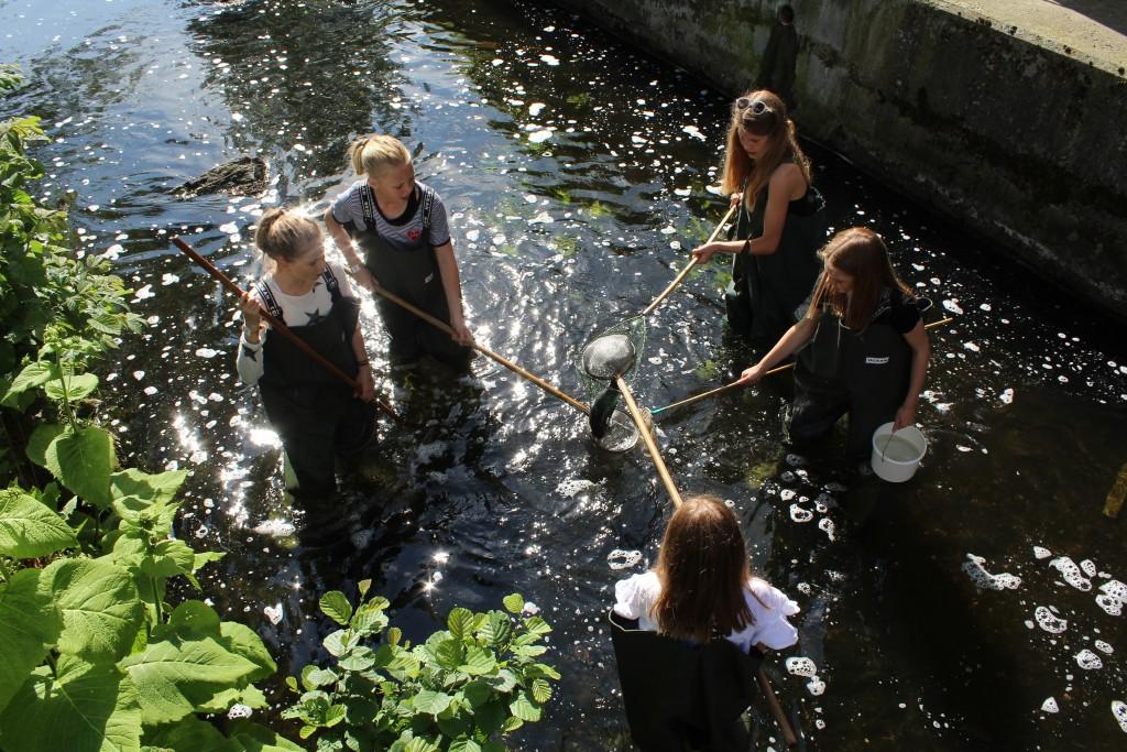 FRemvisning af den ca. 40 cm lange aborre - fanget i net i Mølleåenen kun 50 meter fra Raadvad Naturskole. Fi