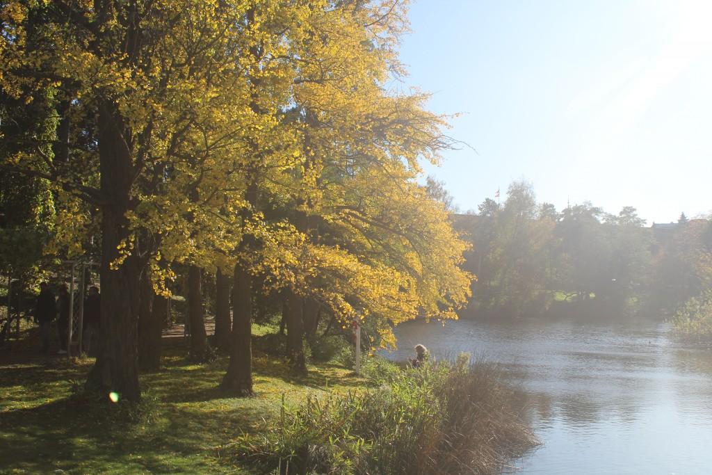 Botanisk Have. Foto den 30. oktober 2017 af erik K Abrahanmsen