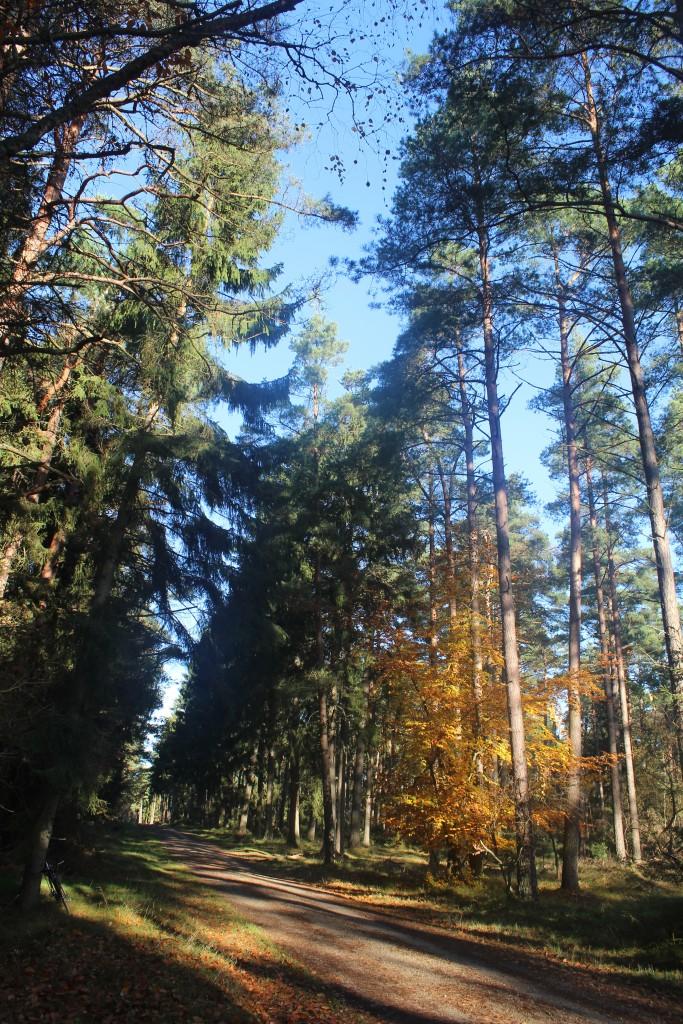 Lejervej i Tisvilde hegn, Vejen gør øst vest og forbinder indgangen ved Asserbo Slotsruin med Tisvilde i øst. Foto i retning øst den 7.november kl. ca. 11 af Erik K Abrahamsen,