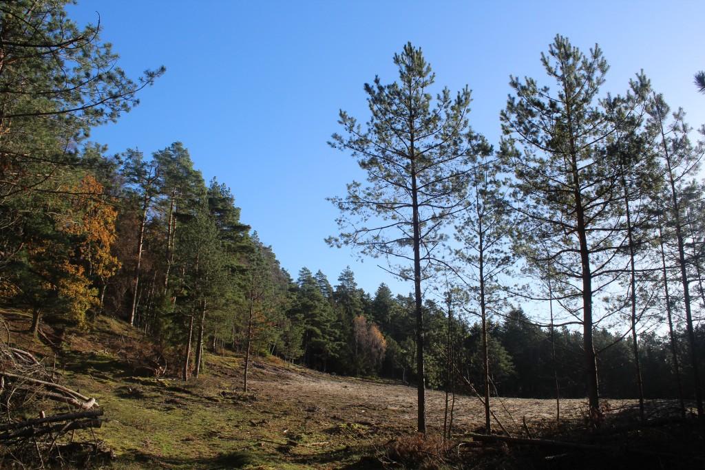 Tisvilde Hegn. ET skovet område tæt på Strandvejen. Foto den 7. november 2017 af Erik K Abrahamsen.