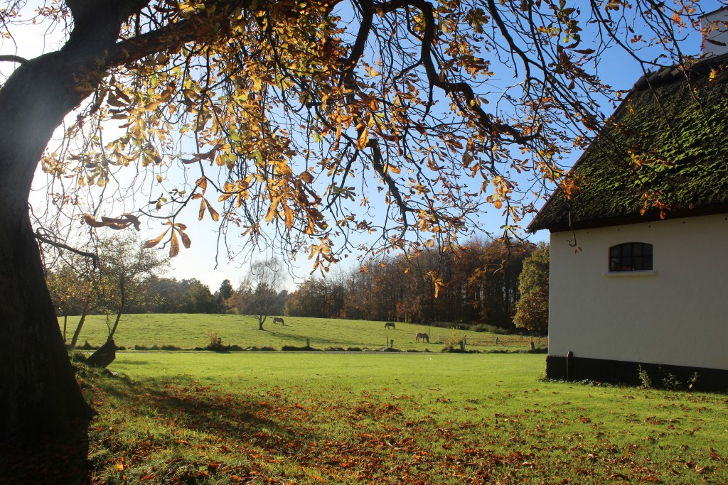 Udsigt mod Slotsport Hus og tilhørende marker med heste. Foto i retning sydvest den 7. november kl. ca. 12.45 af Erik K Abrahamsen.
