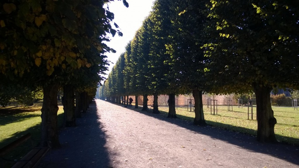 Alle i Kongengs have i København. En stor trækonstruktion ses ses på plænen til højre bag træerne