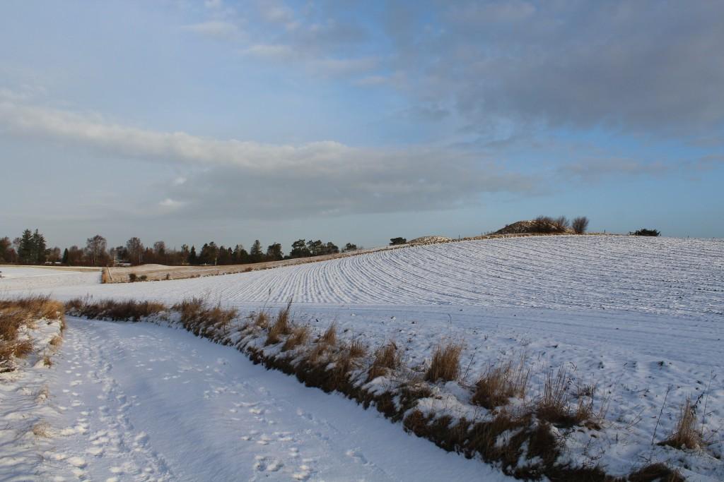 Syvhøje, Melby, Nordsjælland. Udsigt mod bronzealder gravhøse fra 1500 f.Kr. og hulvej. Foto i retning nord den 16. februar 2018 kl. ca 8.30 af Erik K Abrahamsen.