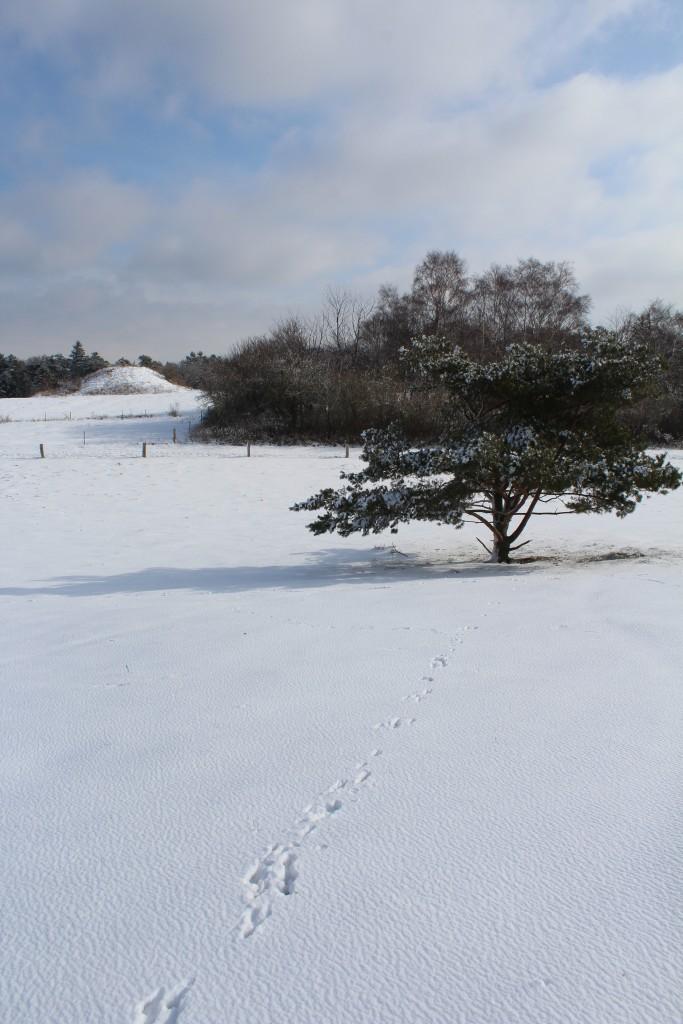 """Udsigt mod den støærste bronzealder gravhøj """"Syv Høje"""". i forgrunden ses dyrespor i sneen."""
