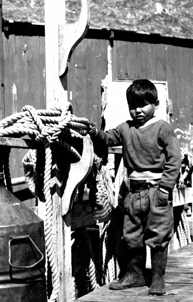 Arsuk. Grønlandsk dren. Foto 1961.