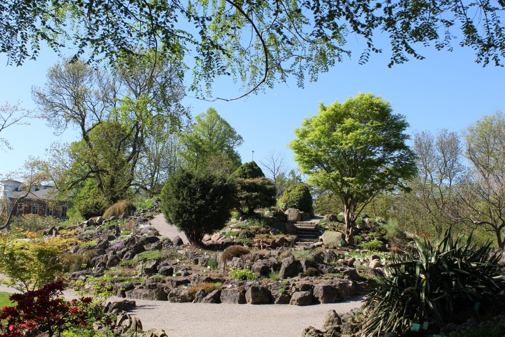 Botanical Garden - view to Rock Garden with alpine plants. Photo 9. may 2018 by Erik K Abrahamsen.