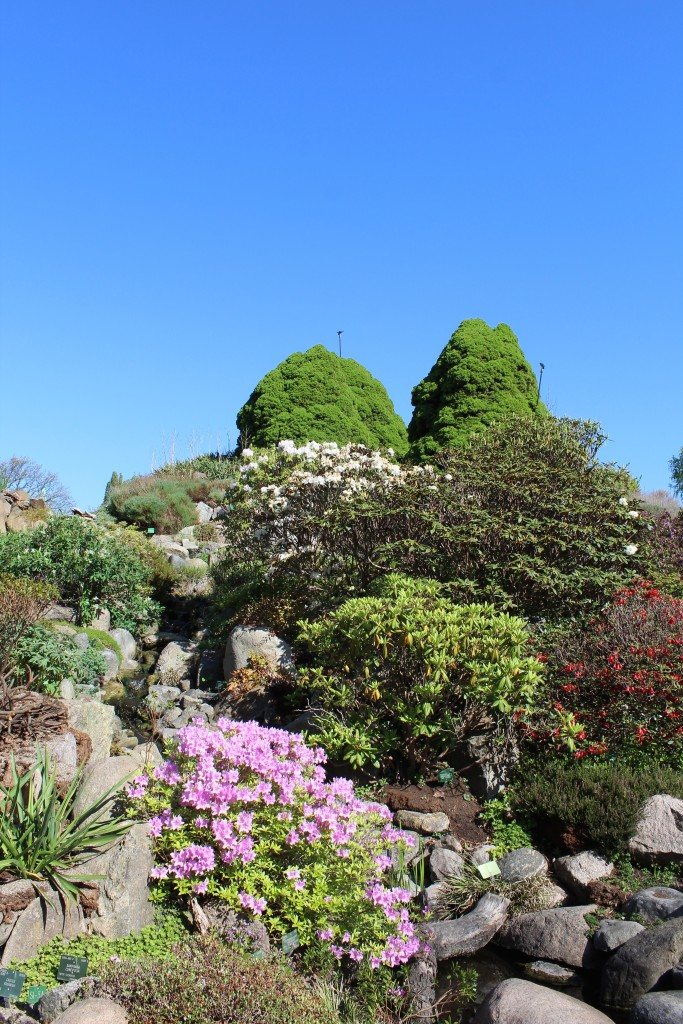 View to top of Rock Garden, Botanical Garden. Photo 9. may 2018 by erik K Abrahamsen.