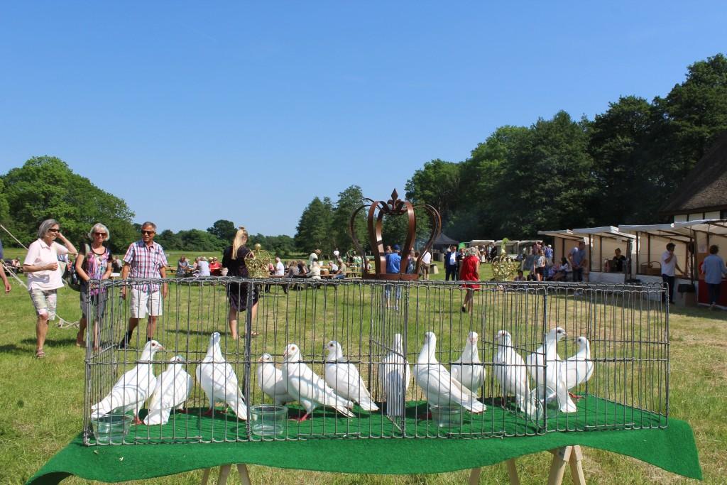 Esrum Kloster og Møllegård. 12 hvide duer i bur med kongekrone. Duerne er her fotografet en time før indvielsesceremonien kl 16. Foto den 29. maj 2018 kl 15 af Erik K Abrahamsen