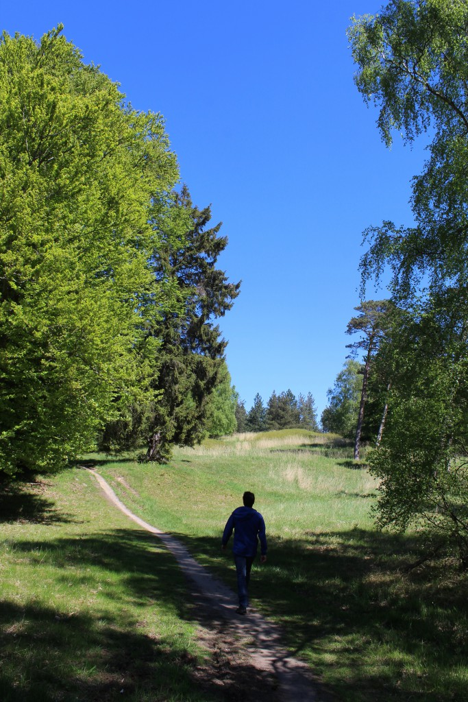 Enebærdalen med 2 bronzealdergravhøje i billedets baggrund. Tisvildehegn . Foto den 15. maj 2015 af Erik K Abrahamsen