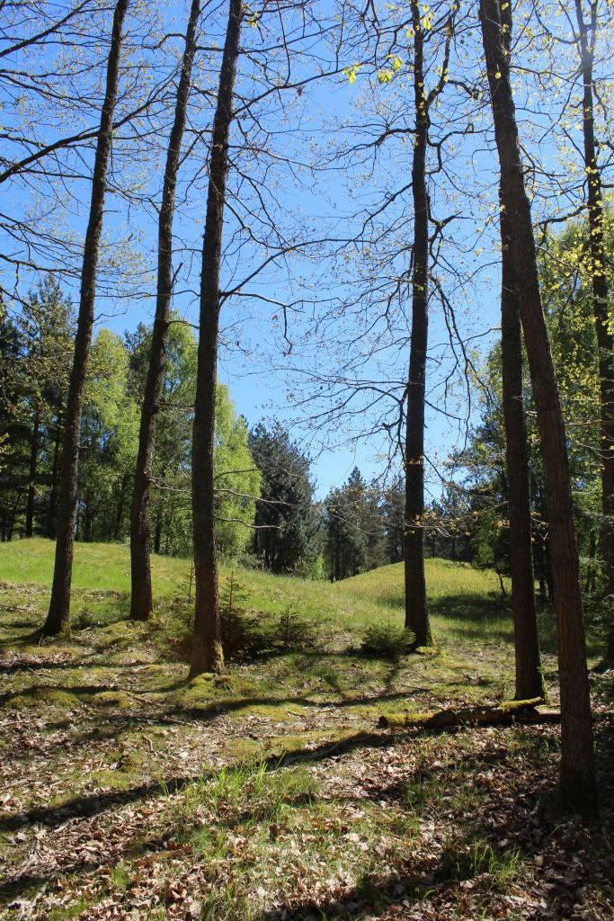 Enebærdalen i Tisvild Hegn. 2 bronzealder gravhøje fra ca. 1500 f.Kr. Foto den 15. maj 2015 af Erik K Abrahamsen