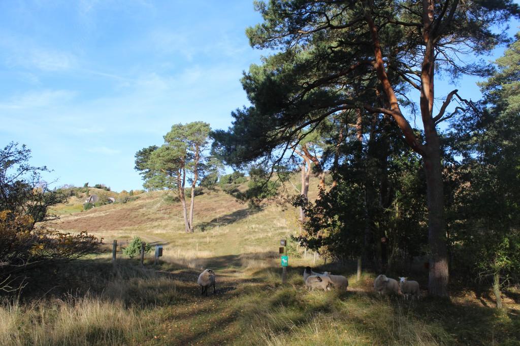 Tibirke bakker. Den offentlige sti gennem det fredede sommerhusområde. Foto den 28. oktober 2015 af erik K Abraham