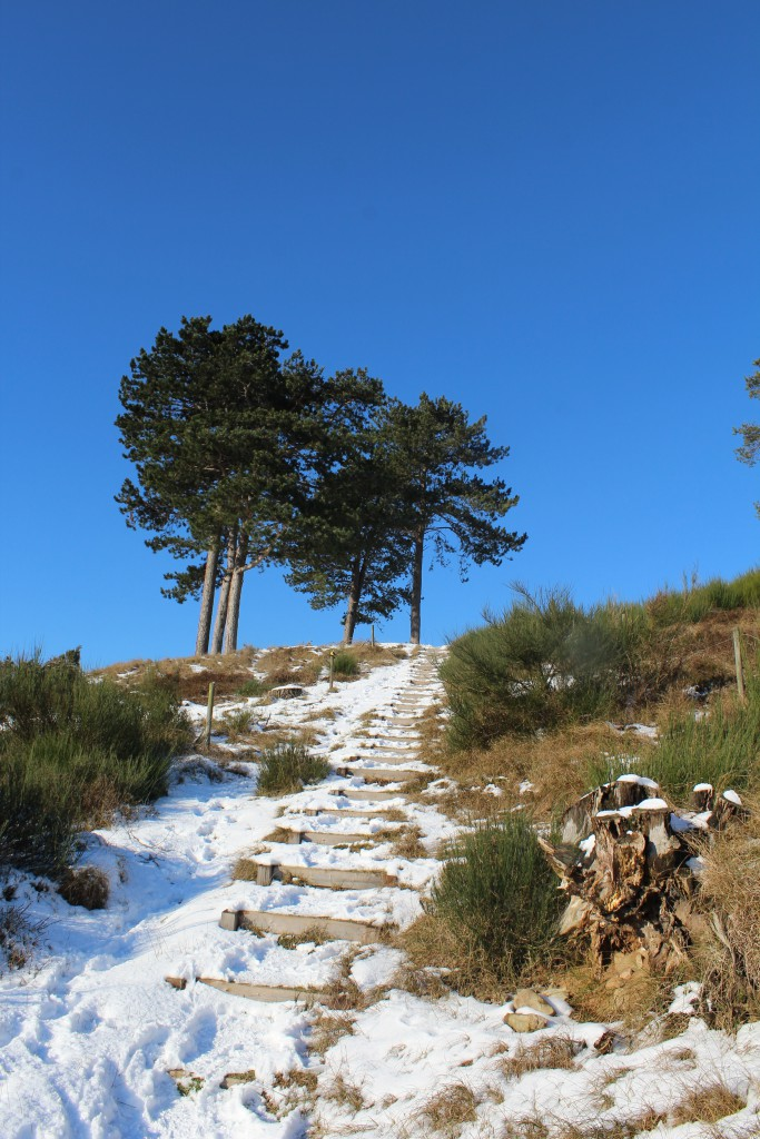 Tibirke Hills. Public path into Tibirke Hills. Photo in direction north 5. february 2015 by Erik K Abrahamse