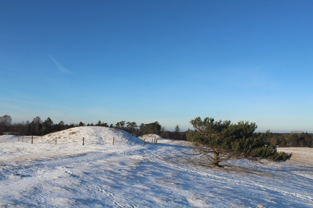 Melby, North Sealand, Denmark.Seven High burial mounds fro Danish Bronze Age 100 b.c.