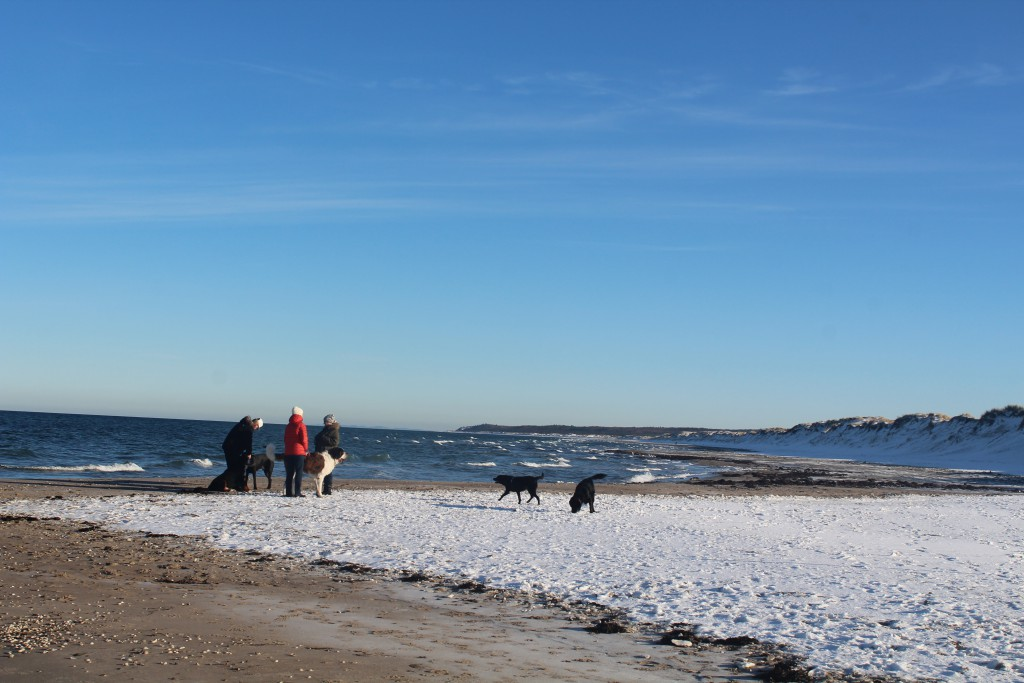 Liseleje Beach at Kattegat Coast. People with their dogs. Photo in direction esat
