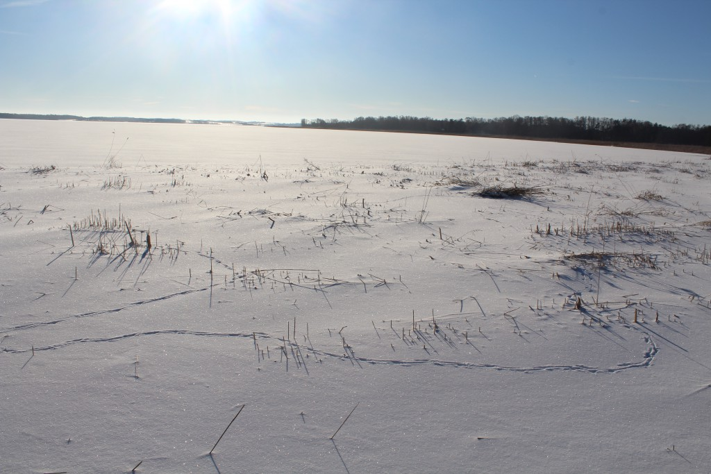 Deer traces in snow, Arre-Lake, North Sealand. Photo in direction