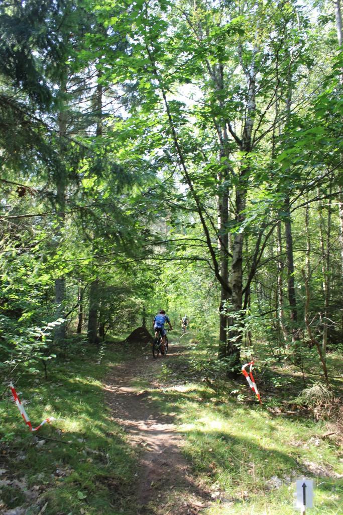 HotCup 2016 Finalen Tisvilde Hegn. Skovsti i retning mod vest fra Skobkærsvej. Phoot i retning vest den 10