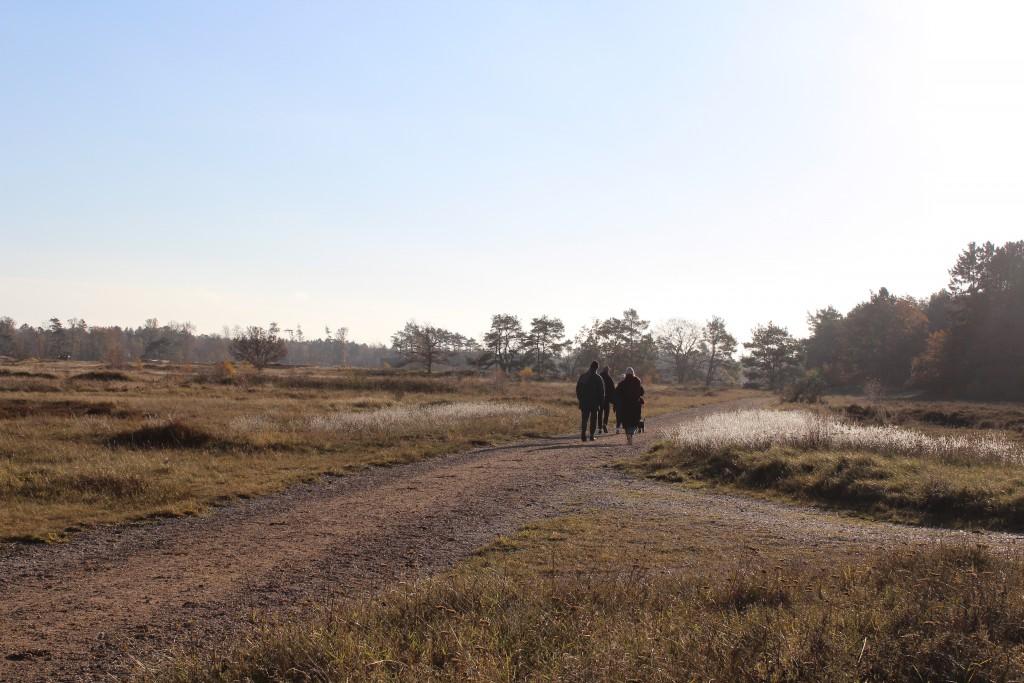 Melby Overdrev. Grusveh Tangvej fører fra Assserbo til Kattegat. Foto i retnung syd mod Asserbo den 19. november 2016 af Erik K Abrahamsen.
