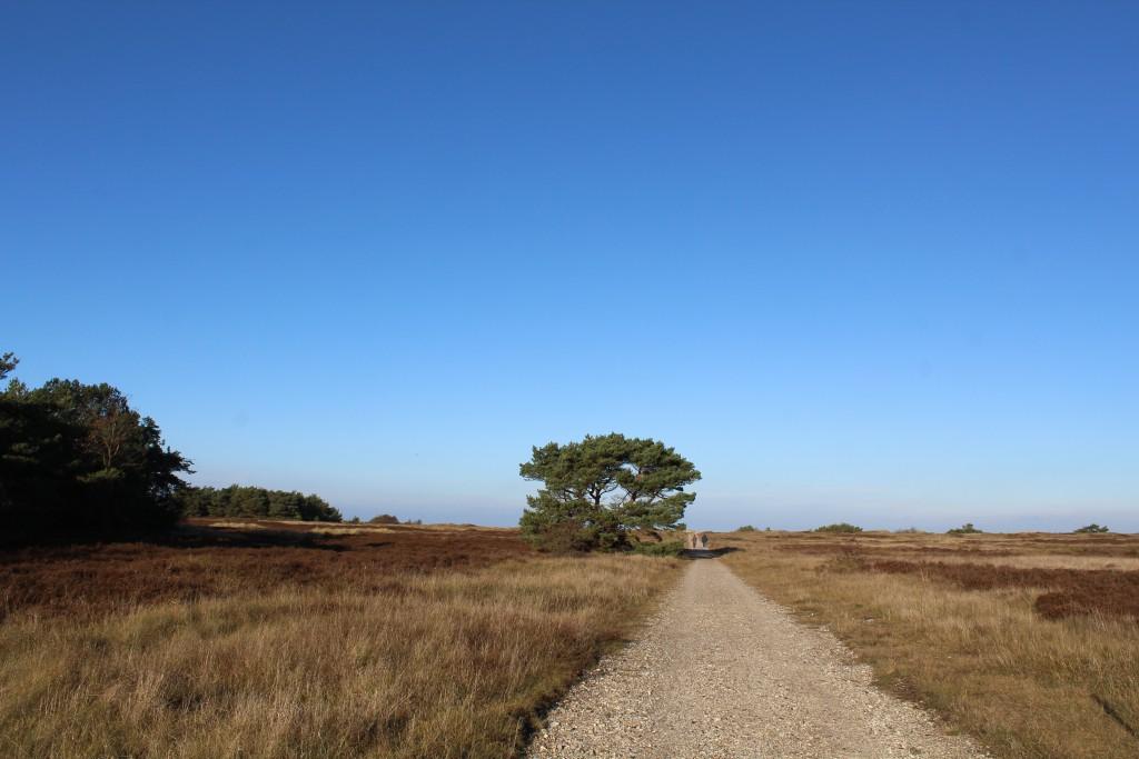 Melby Overdrev. Sti der fører mod nord til kattegats Kyst o