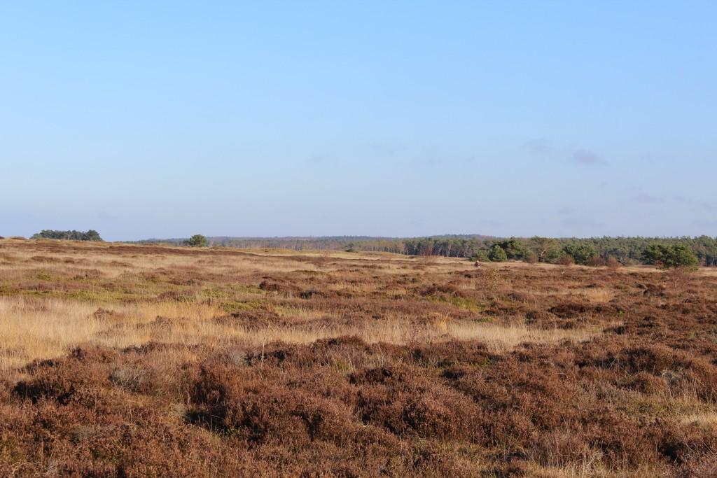 Melby Overdrev. Udsigt mod øst til Asserbo Plantage og Tisvilde Hegn. Foto den 19. november 2016 af Erik K Abrahamsen.