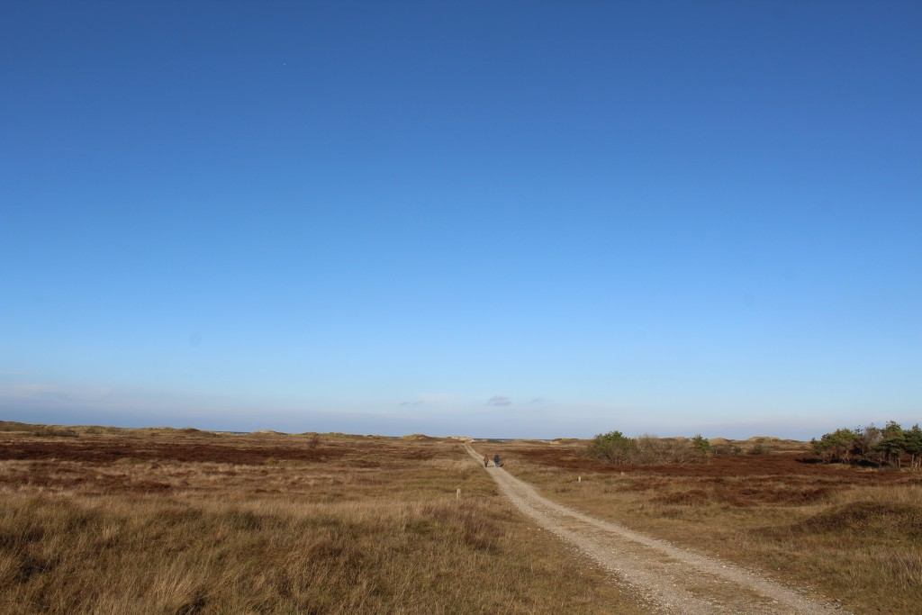 Melby Overdrev mellem Asserbo Plantage og Liseleje Plantage og ud til Kattegats Kyst. Foto 18. november 2016 af Erik K Abeahamsen