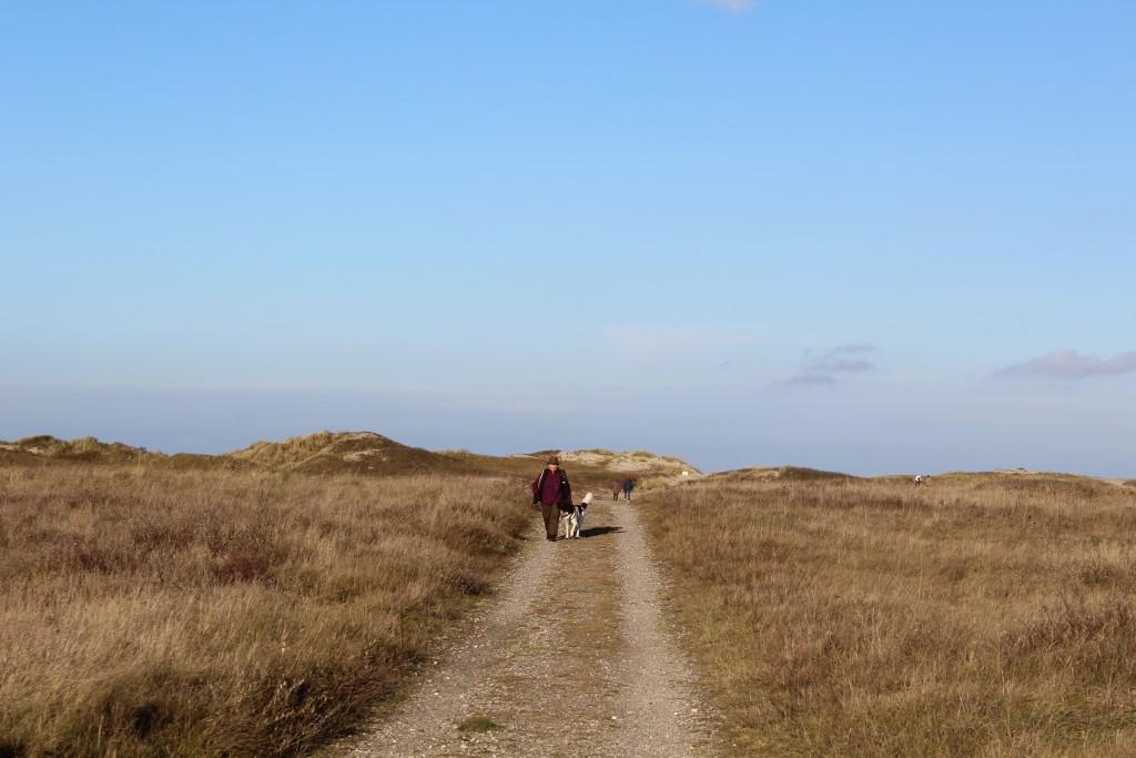 Melby Overdrev. Udsigt mod Tangvej og klitterne ved Kattegats Kyst