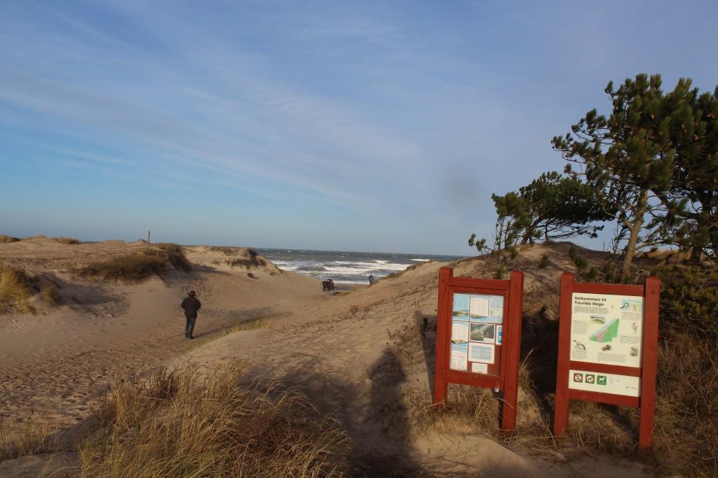 Adgangsvej til Liseleje Strand. udsigt mod nord til Kattegat. Foto den 27. december 2016 af Erik K Abrahamsen.