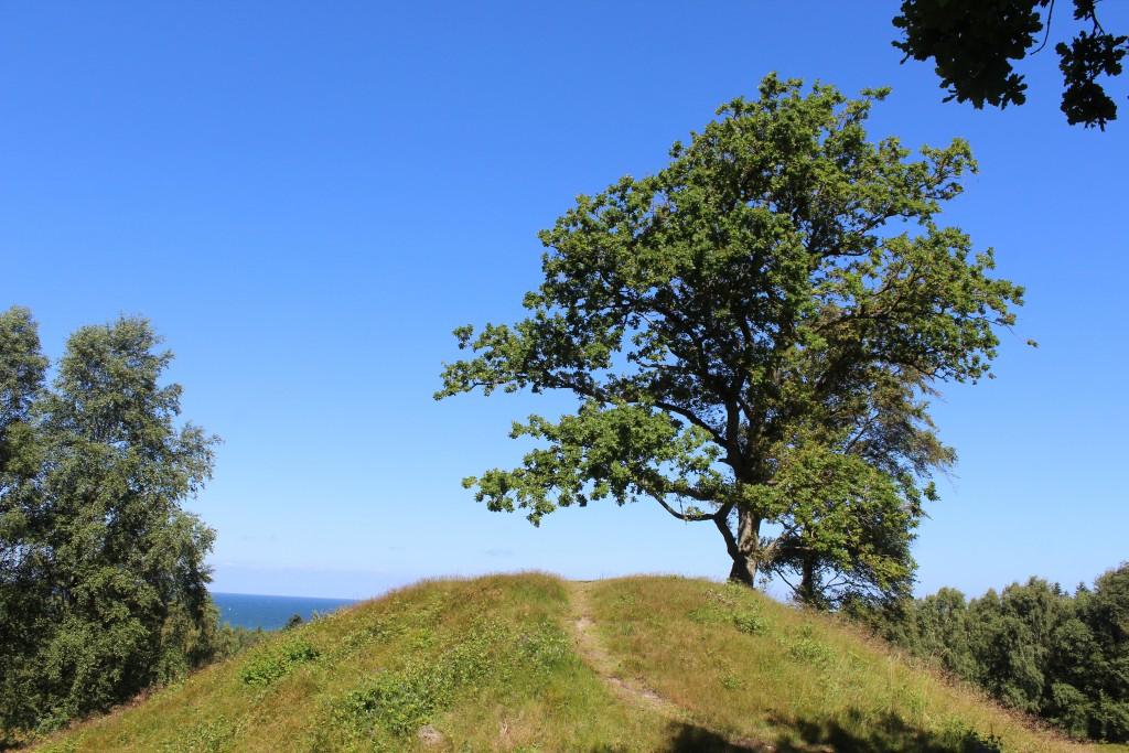 Harehøje - bronzealder gravhø