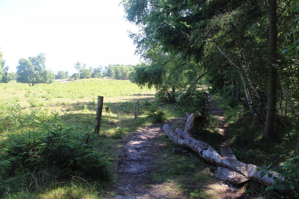 Stier gennem skoven fra Harehøje ned