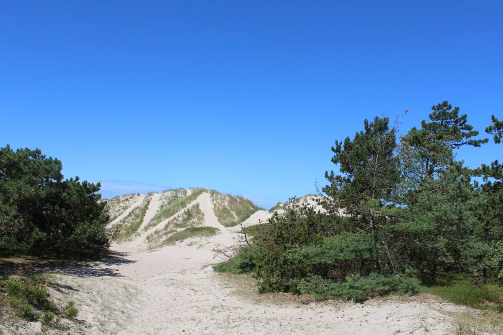 Klitter på Jydestarnd ud til kattegat i Tisvilde hegn mandag den 17.7.1017. Foto i retning nord med stien Jydelinien af erik K Abrahamsen.