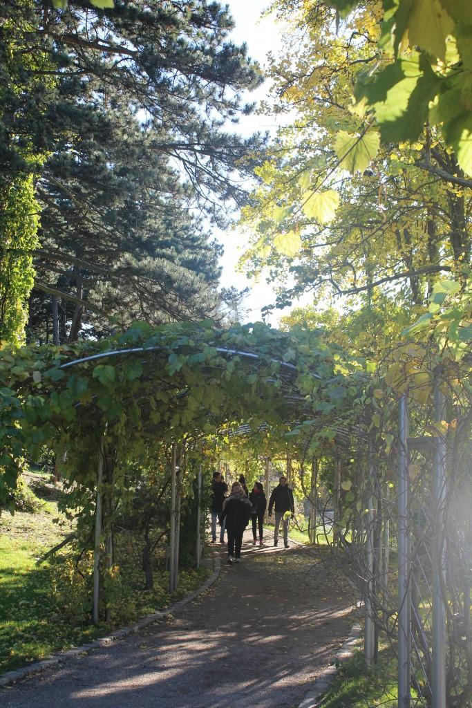 Botanisk Have. Foto den 30. oktober 2017 af Erik K Abrahamsen.