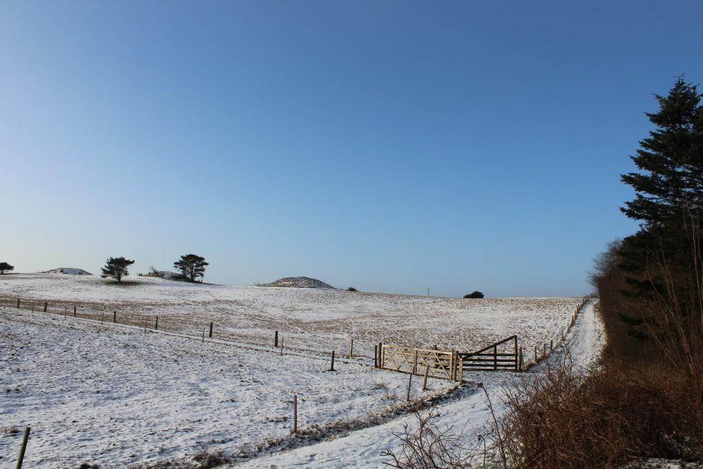 Syvhøje. Udsigt mod brobzealder gravhøje. Foto i retning syd-vest den 16. februar kl. ca 9.15 af Erik K Abrahamsen.