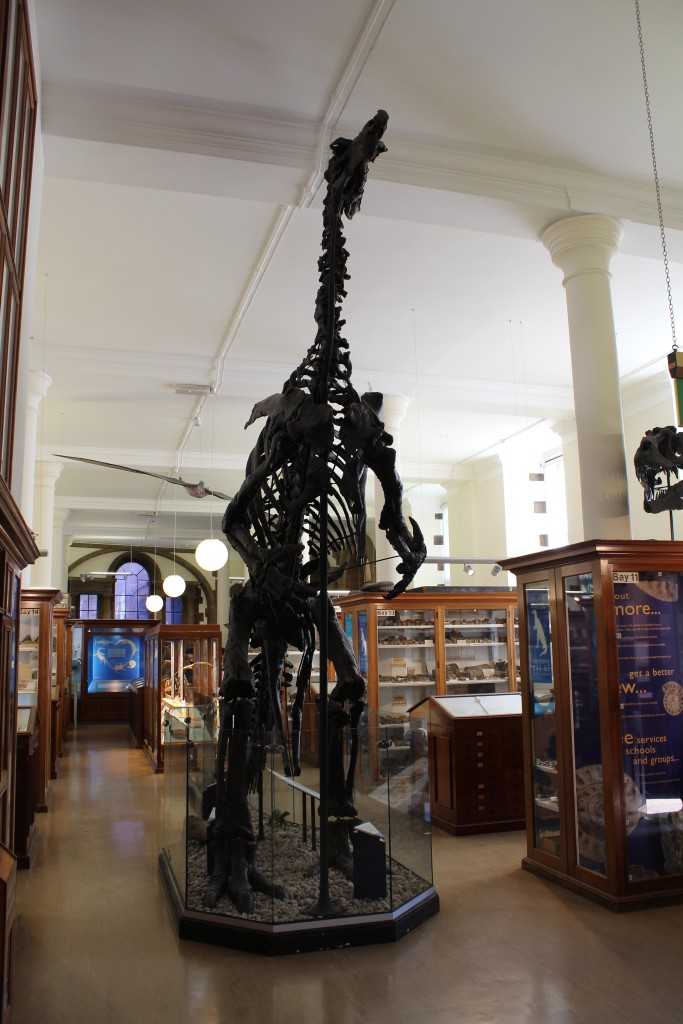 Sedgwick Museum of Geology and Earth Scieneces